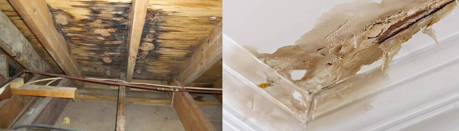 Friday Claim Services - Roof Leaks
